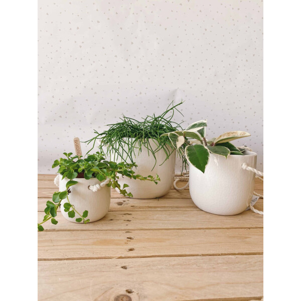 vaso corda bianco vasi per piante
