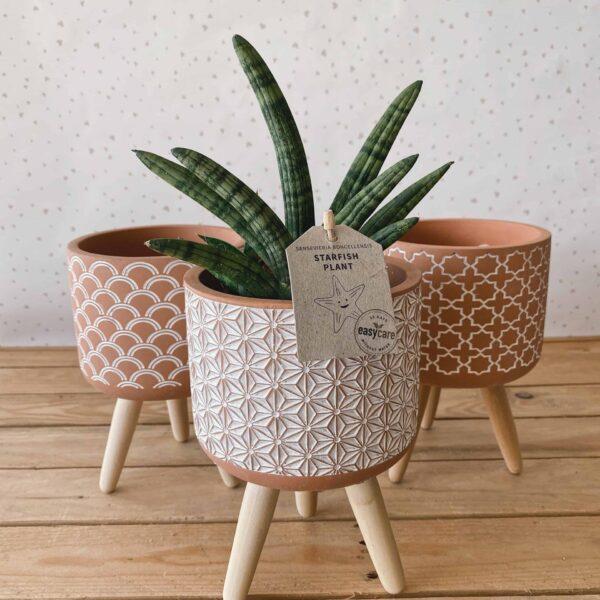 cement pot grande vasi per piante
