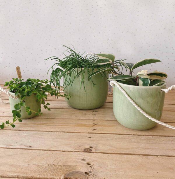 vaso corda verde vasi per piante